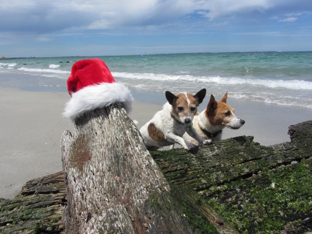Christmas doga at the beach