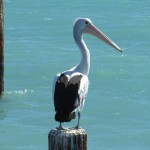 Pelican Decorations To Complete Your Coastal Or Beach Themed Home
